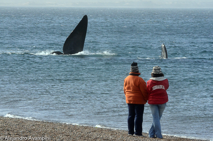 Puerto Madryn, Whale Watching from shore: El Doradillo