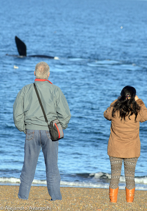 Puerto Madryn Valdes Peninsula Argentine Patagonia Watching whales in Motherhood from shore