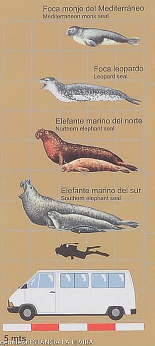 elephant seal argentine patagonia