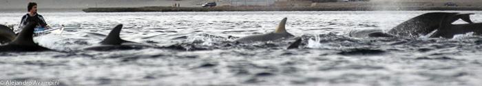 Killer Whale in Península Valdes - kayak Canoe