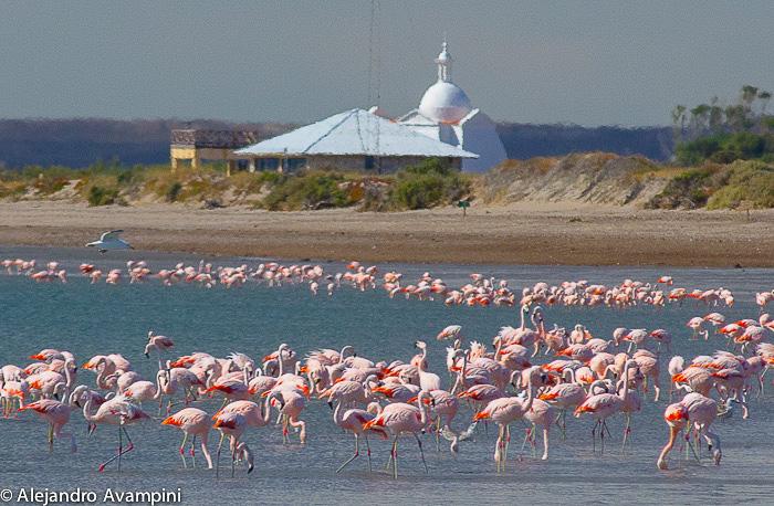 Flamencos en la Isla de los pájaros - Peninsula Valdes