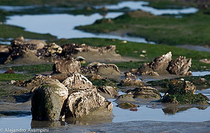 Fósseis na linha da maré baixa