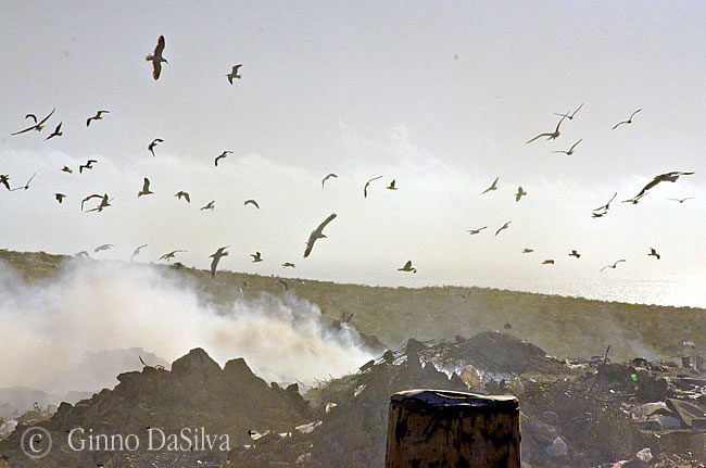 El viejo basurero de Puerto Madryn sobrevolado por gaviotas
