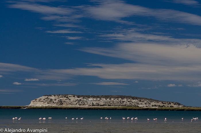 Bird Island - Paradise Pearl- Valdes Peninsula - Argentine Patagonia
