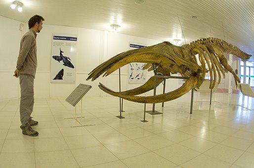 Esqueleto de ballena península valdes