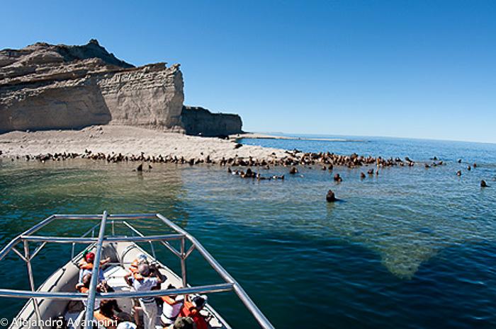 Loberia Punta Pirámide - Península Valdés