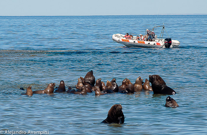Ssea Lions Colony - Valdes Peninsula