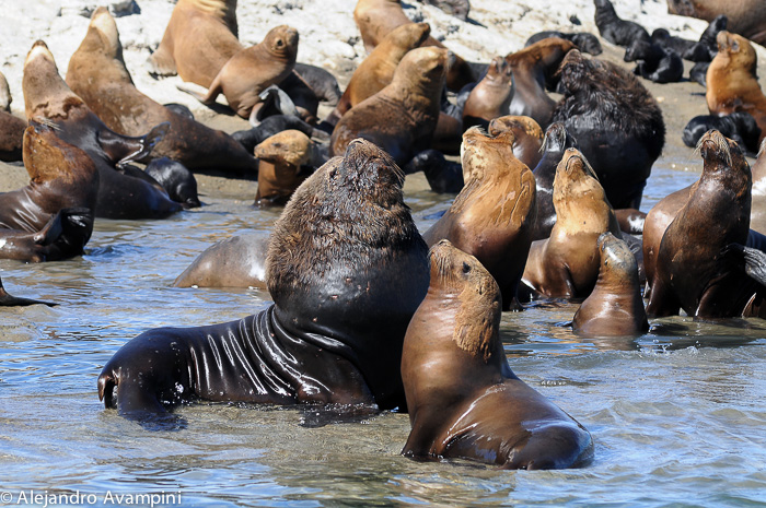 Sea lions tours adventure Puerto Piramides