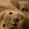 Mapas de Península Valdés Patagonia Argentina - Como llegar