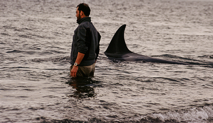 Roberto Bubas with the orcas in Punta Norte