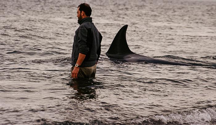 Roberto Bubas with the orcas in Punta Norte
