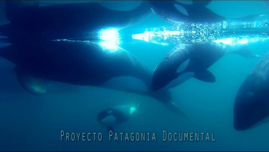 orcas_cerca