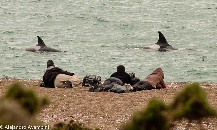 Fotographers in Punta Norte in Orcas Season - Peninsula Valdes