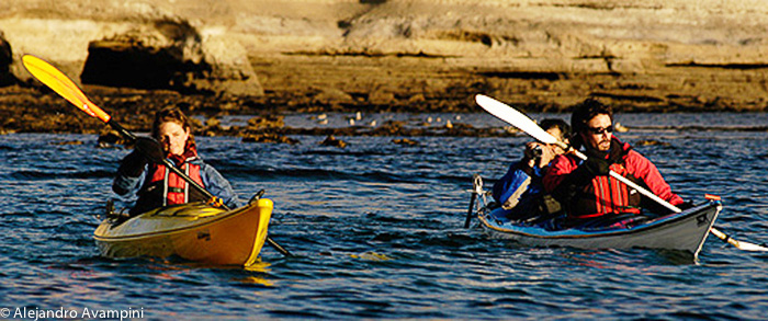 Expeditions Kayaks in Puerto Piramides Peninsula Valdes Argentine Patagonia