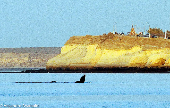 Whale in Puerto Madryn, Peninsula Valdes