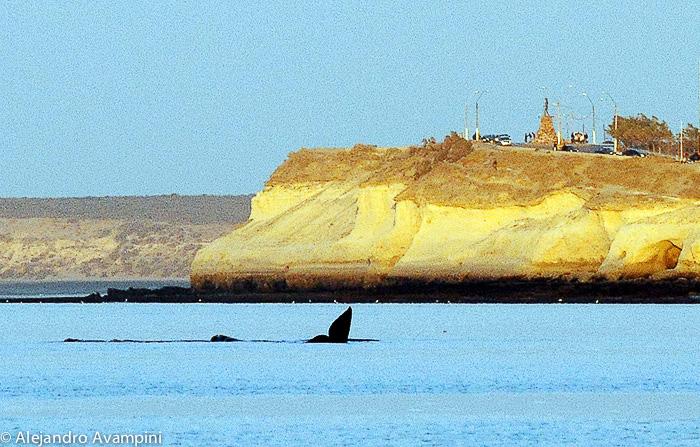 Observação de Baleias - Península Valdés na praia de Puerto Madryn