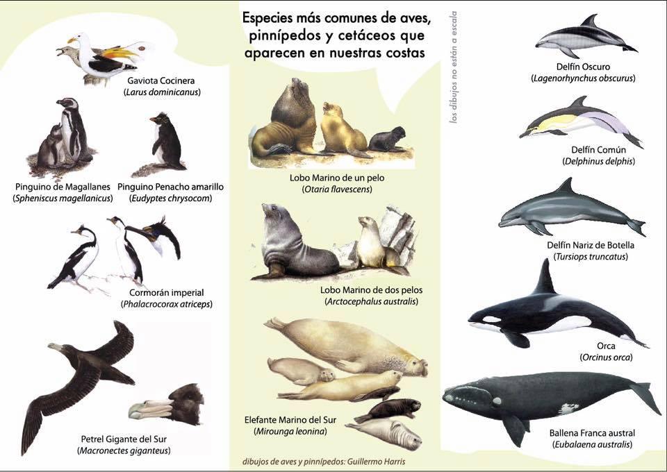 Espécies de animais, mais comuns para ver na costa de Chubut