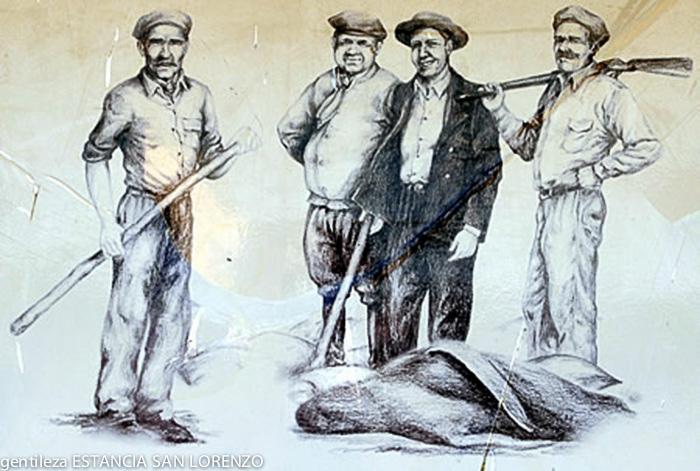 Loberos en Península Valdés - Patagonia Argentina