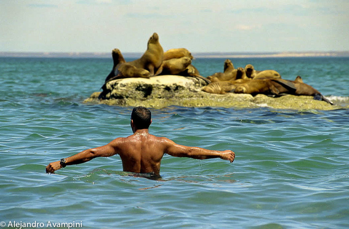 Closer to Nature - Man and sea lions in Peninsula Valdes