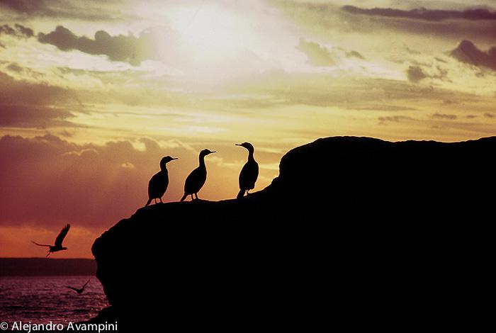 Birds Cormorant Peninsula Valdes