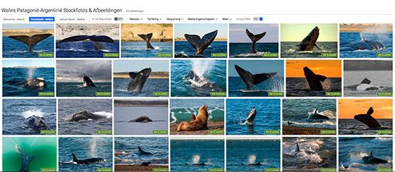 Valdes schiereiland walvis spoten