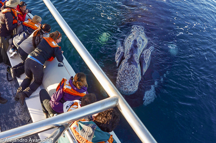 whale watching Puerto Piramides Valdes Peninsula Argentine Patagonia