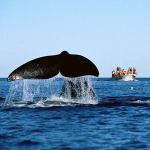 Whale Watching - Valdes Peninsula - Puerto Piramides and Puerto Madryn